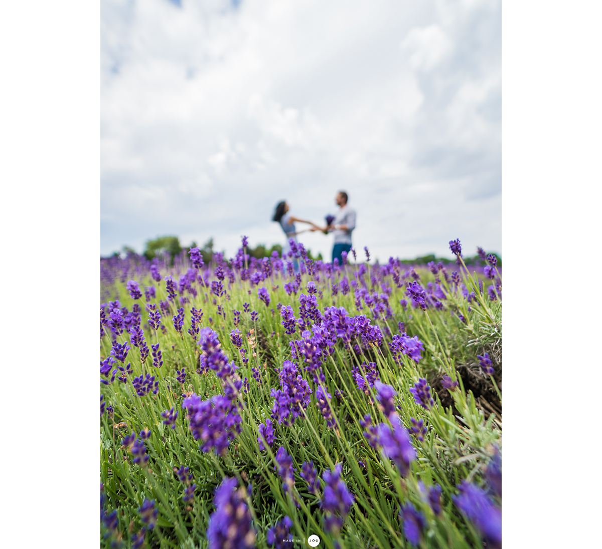 lavender_by_the_bay